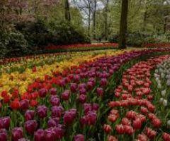 Hollanda da yaşamak isteyen bayanlar yazsın